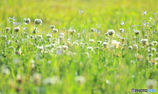 天気がいい日は草でもハイテンション!