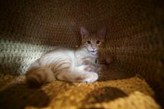 籠の中の猫