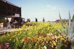 レンガ倉庫の花畑