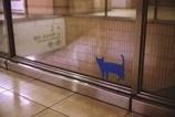 踊り場の猫 (5)