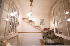 猫部屋開放 (2)