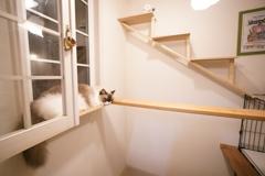 猫部屋開放 (1)