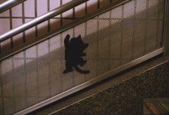 踊り場の猫 (4)