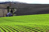 朝日のあたる丘