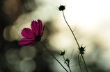 秋告げる花