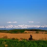NIKON NIKON D90で撮影した風景(美瑛にて~耕す力)の写真(画像)