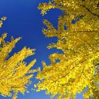 NIKON NIKON D3Sで撮影した風景(ゴロリして秋空を)の写真(画像)