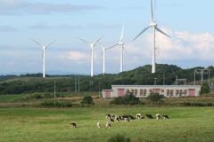 北の丘の風車_04