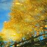 秋色さがし~水のキャンバス3~