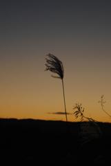 風になびく