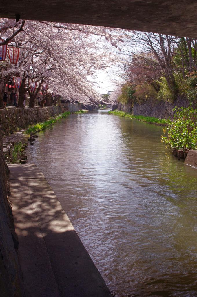 水の都 近江八幡 春