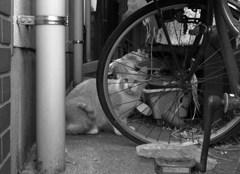 街猫15 ~抜け道の~