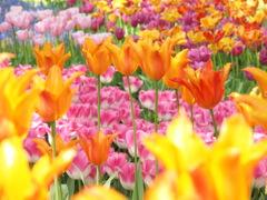 どの花見てもきれいだな~♪