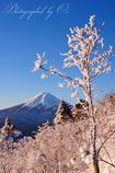 ささやかに咲く雪の花