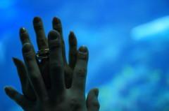 ぼくの手とあなたの手