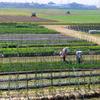 農業で暮らす人々