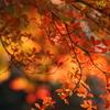 晩秋を謳歌