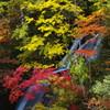 滝を抱く紅葉
