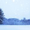 大雪の公園