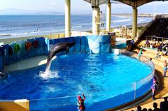 新江の島水族館 Ⅴ