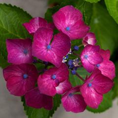 庭の花 Ⅱ