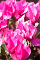 庭の花 Ⅰ