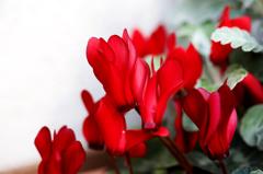 庭の花 Ⅳ