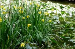 陽春の池 Ⅱ