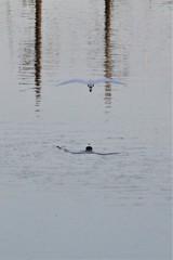 白鷲飛翔2