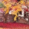 東福寺7ー鮮烈な紅