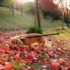 秋を楽しむ♪