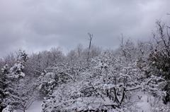 冬のひと時