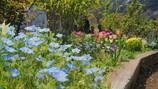 花のグラデーション