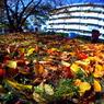 秋の散歩。