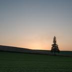 美瑛 10月のツリー