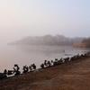 ウトナイ湖  鴨たちの朝