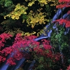 恵庭渓谷紅葉
