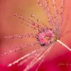 雫に咲く花