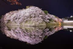 彦根城春景