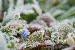 小さな冬景色