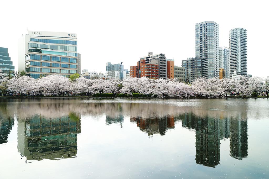 Sakura,2016・・・。