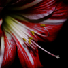 Lily・・・。