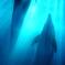 dolphin . 3