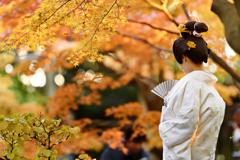 日 本 美  .
