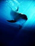 dolphin .