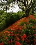 紅 丘 .