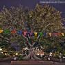 CANON Canon EOS 5D Mark IIで撮影した風景(El Pueblo DE Los Angeles2☆)の写真(画像)