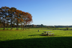 草原の朝 11