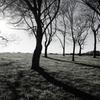 冬の木立 3