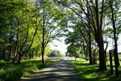 森の入口または出口 2
